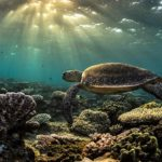 Cairns Diving