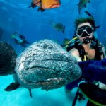 Coral Sea Scuba Dive Expeditions