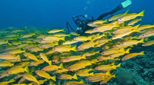 scuba dive the beautiful ribbon reefs