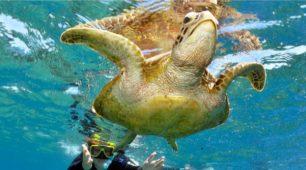 snorkel the Great Barrier Reef